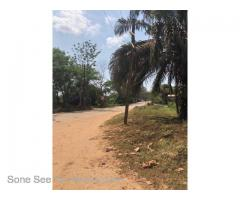 Pearl Lane Sone, (SHL4-001596) For Sales Hotel Land At Mingalardon Tsp