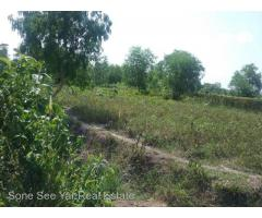Sale Nyaunghnapin, Speical Zone (2) of vegetable and fishery breeding farm, Hmawbi Township